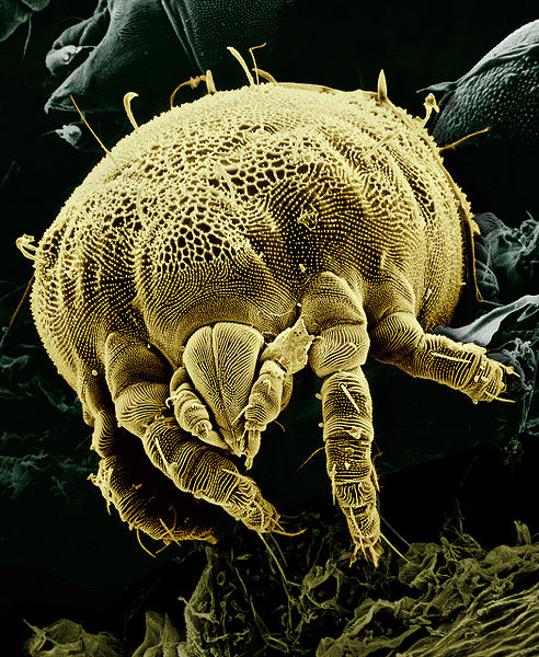 Yellowmite