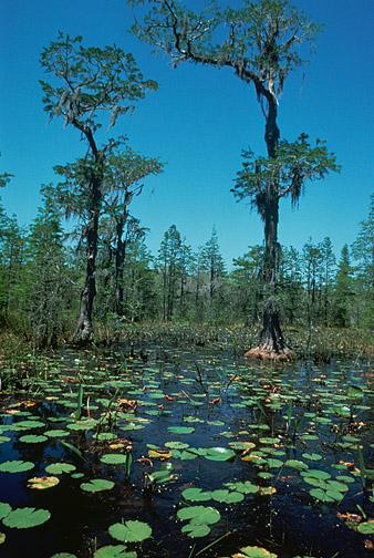 Monday Monster: Swamp Drake
