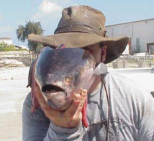 Ben McFarland, Fish Face